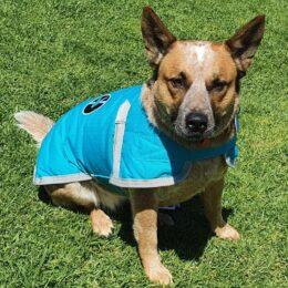 Aqua waterproof dog coat from Lucky Bay Brewing